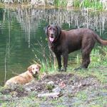 Tess & Bella by the trout pond